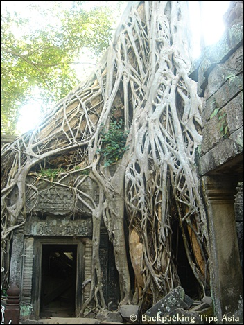 Banyan trees at Ta Prohm temple in Angkor park