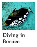 Diving in Sabah, Malaysian Borneo