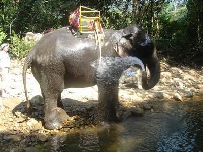 Elephant showering on Koh Chang island