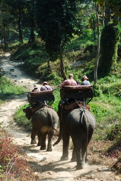 Elephant trekking in Thailand Photo: sack ©iStockphoto.com/sack