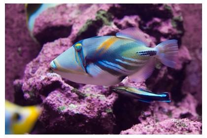 Parrot fish, ©iStockphoto.com/Heiko Potthoff