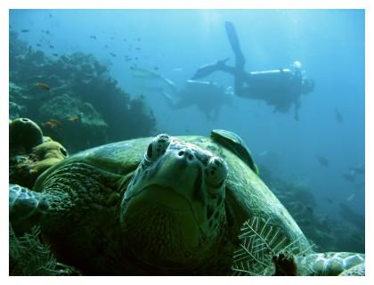 Turtle, ©iStockphoto.com/simon gurney