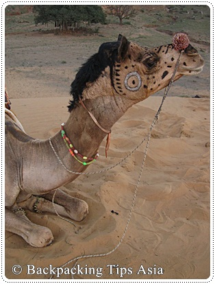 Another camel in Pushkar