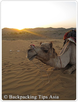 My awesome camel in Pushkar