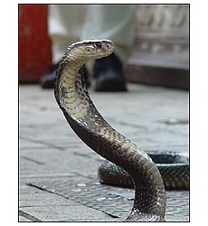 Snake farm in Bangkok, Thailand