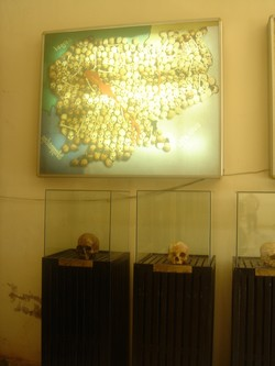 Skulls at S-21 museum in Phnom Penh, Cambodia